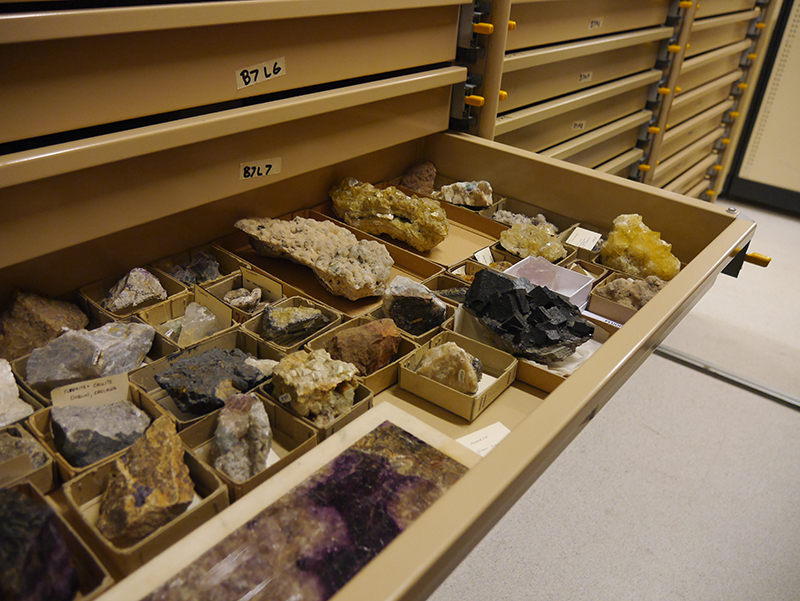 Mineral specimens housed in the collection archive.