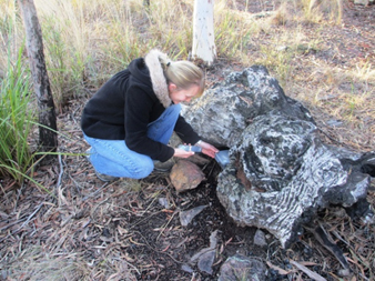 An example of where you may find a geocache. Girl searching under a log in the bush.