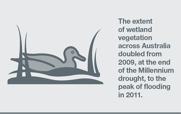 The extent of wetland vegetation across Australia doubled from 2009, at the end of the Millenium Drought, to the peak of flooding in 2011.